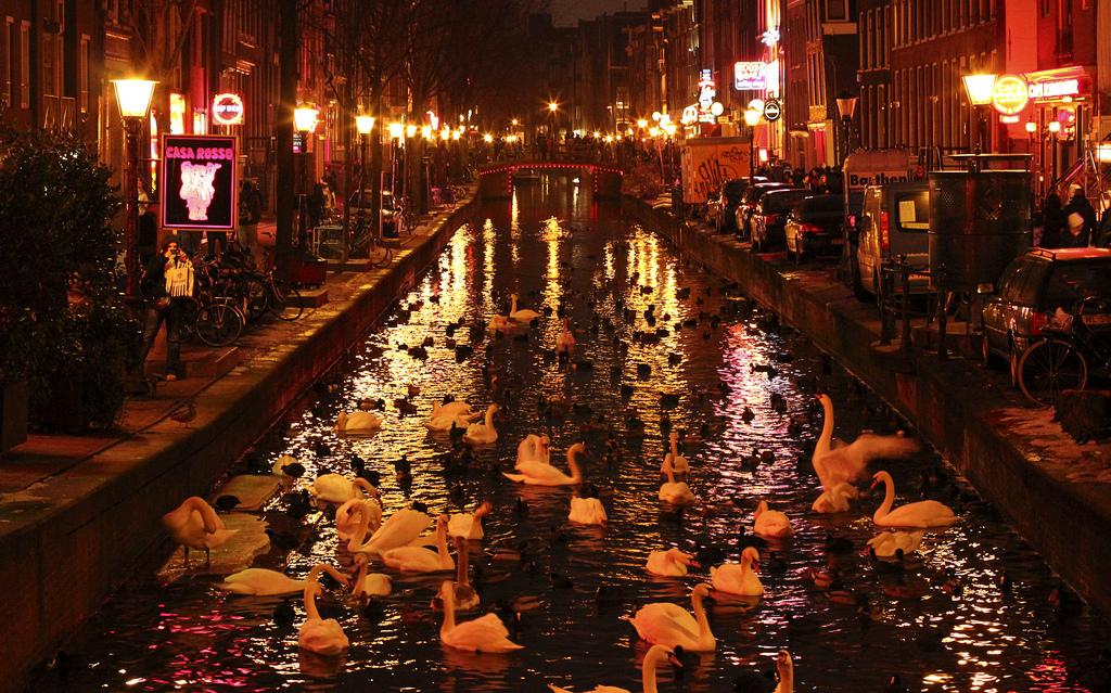 Разврат в нидерландах
